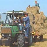 Zorgboerderij Balstien, Bontebok