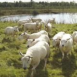 Zorgboerderij 'de Haam', Veulen