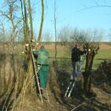Werkprojekt 'De Korenmaat', Arnhem